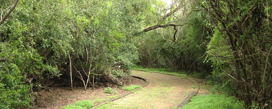 Hiking and Biking Trails in Mcallen