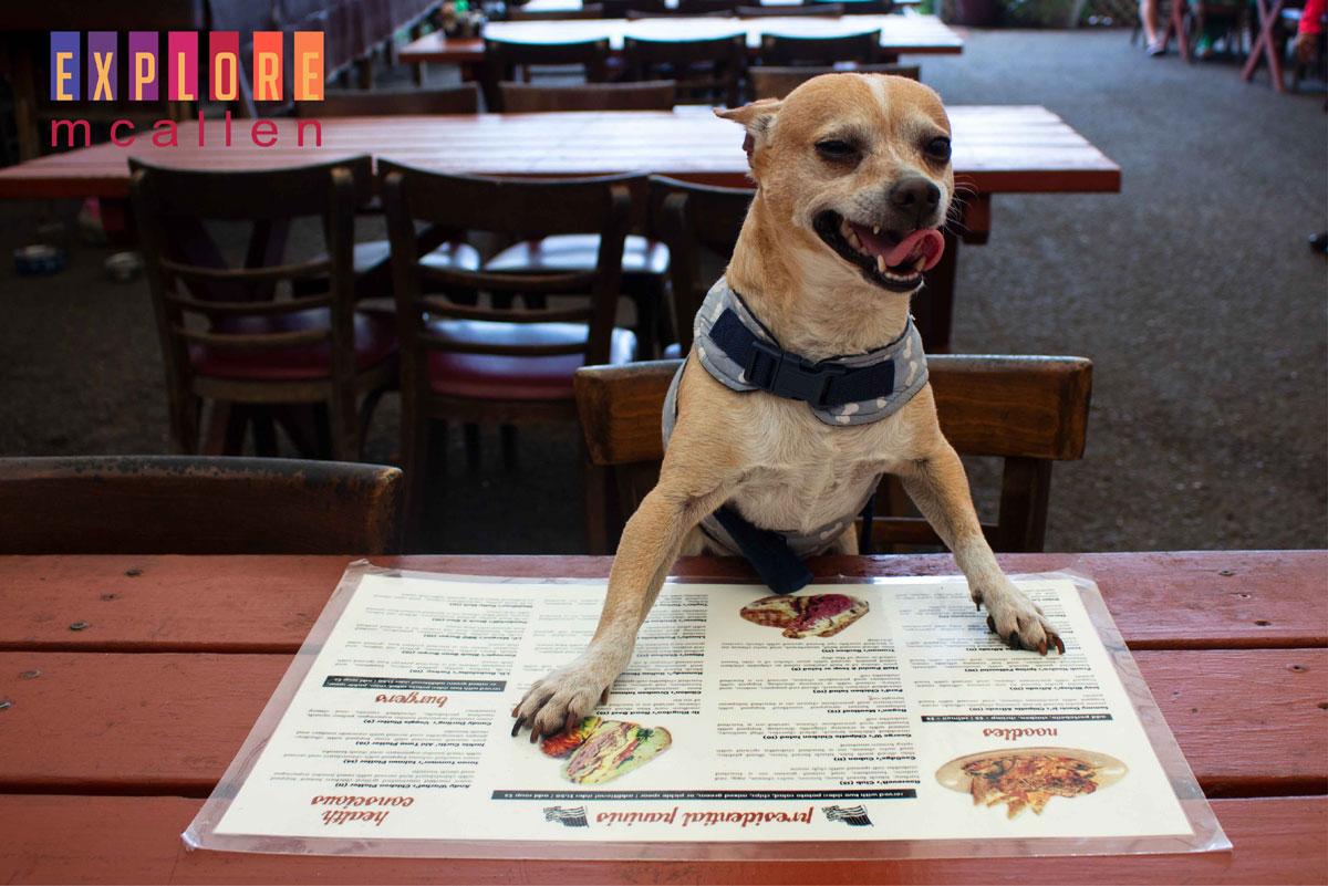20 Dog-Friendly Restaurants, Bars, & Cafes in McAllen | Explore McAllen