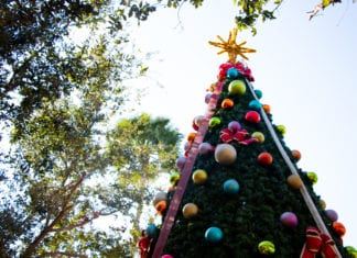 McAllen's Best Christmas Tree Spots to Snap the Perfect Instagram Picture!