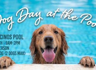 Dog Day at the Pool